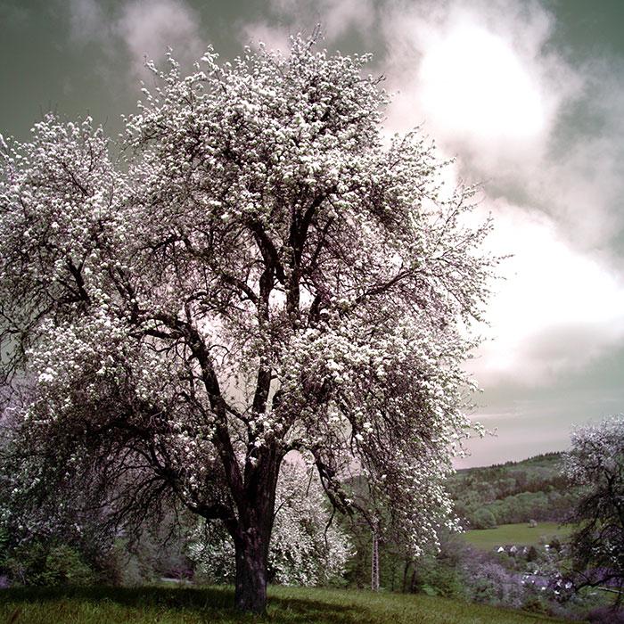 Jonathan's Eternity Tree