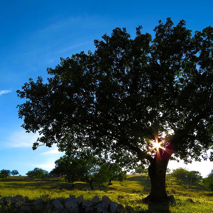 Marcy's Eternity Tree