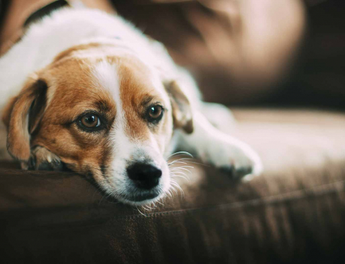The Grieving Process – Pet Loss
